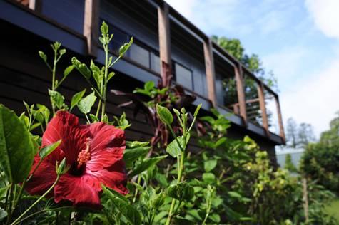 Garden - Broad Leaf Villas
